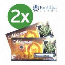 Magnum Auto x3 - Buddha Seeds