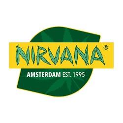 Master Kush [1 semilla Fem] - Nirvana