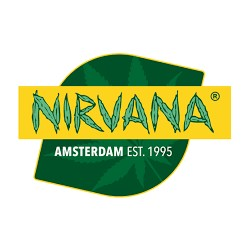 Black Jack [1 semilla Fem] - Nirvana